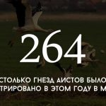 Цифра дня: результаты переписи гнезд аистов в Молдове