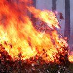 На Ботанике произошёл пожар. Горел четвёртый склад веток