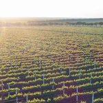 Вино Молдовы в цифрах