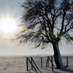Маршрут на выходные: самые известные вековые деревья Молдовы