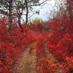 Очень красивая молдавская осень в 30 кадрах