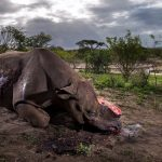 Объявлены победители конкурса Wildlife Photographer of the Year 2017