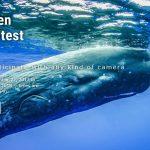 Открыт прием заявок на Международный фотоконкурс Olympus Global Open Photo Contest