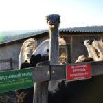 Фоторепортаж из мини-зоопарка ZooClub в селе Бардар