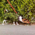 Правила маскировки: Свитера, сливающиеся с окружающими объектами, в фотопроекте Knitted Camouflage