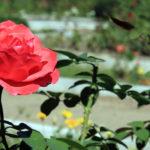 Путешествие по Молдове: 5 интересных фактов о Ботаническом саде в Тирасполе