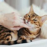 Коротко и ясно: почему коты урчат