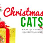 Ярмарка в кишинёвском клубе-музее кошек