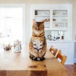 Итальянка завещала коту 30 тысяч евро