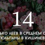 Цифра дня: сколько стоят тюльпаны в Кишиневе