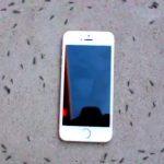 Муравьи VS iPhone: пользователи Сети снова обсуждают странное видео