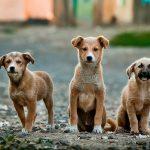 Мэрия Каушан открыла приют для бездомных животных