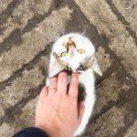 #localsmd: мартовские коты