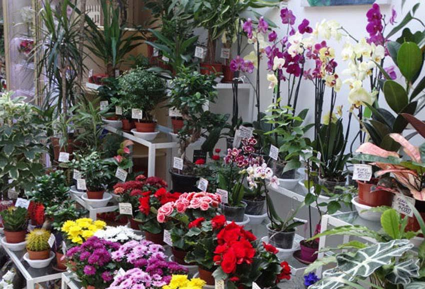 Цена на цветы в витебске — img 2