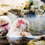 10+ смешных фотографий животных с конкурса Comedy Wildlife Photo Awards 2018