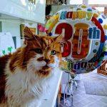 Старейшему коту в мире исполнилось 30 лет