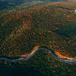 Фото дня: дорога через Хынчештский лес
