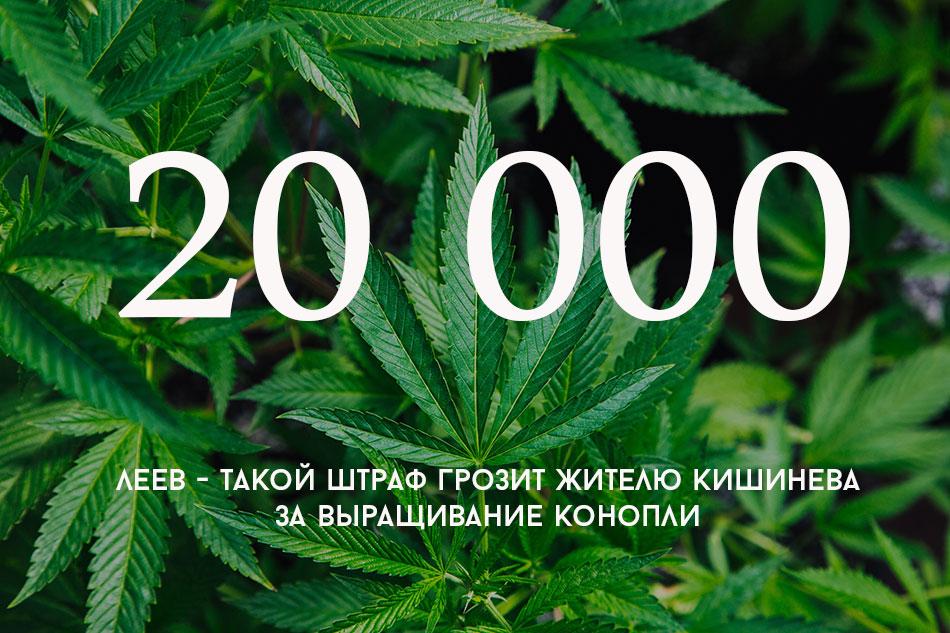 Марихуана наше все серии украина легализация марихуаны